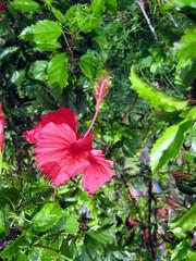 Flor na ilha.jpg